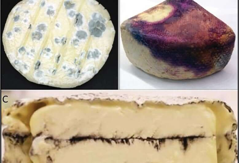 Understanding spoilage and quality issues may improve American artisan cheesemaking industry
