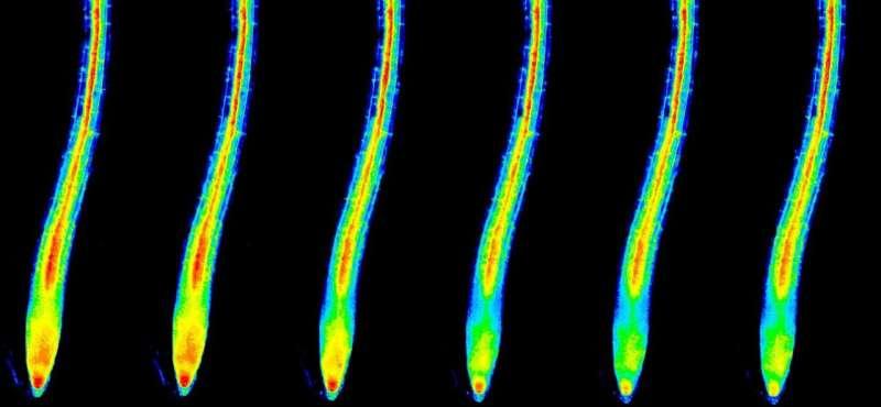 Los investigadores muestran dónde y cómo las plantas detectan el nutriente potasio