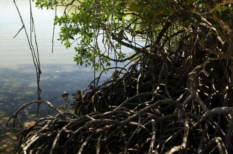 Scientists describe 'hidden biodiversity crisis' as variation within species is lost