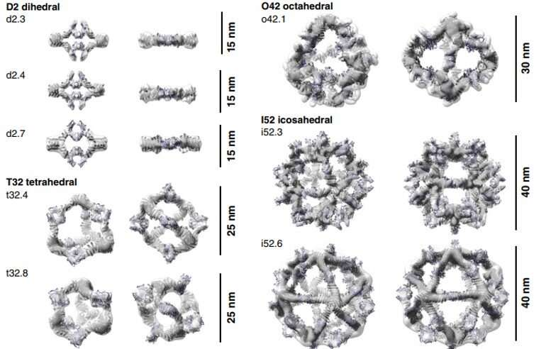 Designed proteins assemble antibodies into modular nanocages.