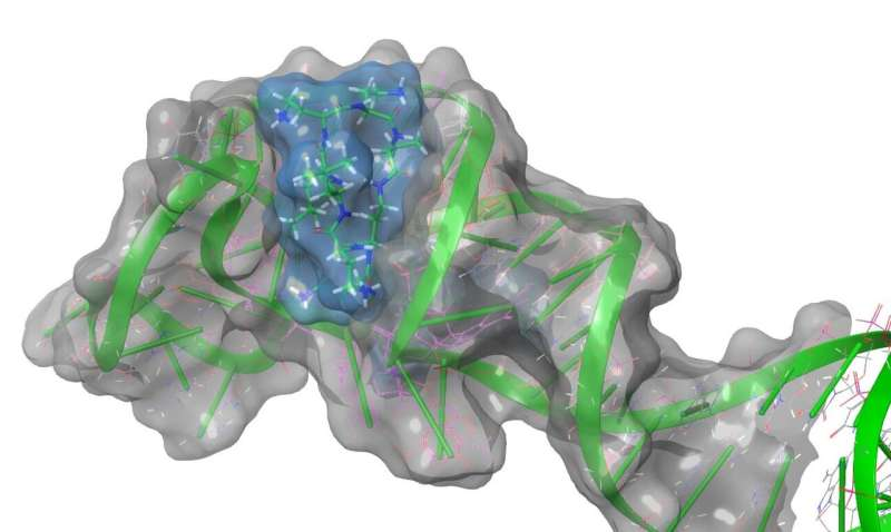 Researchers ID potential target for anti-viral drugs to battle COVID-19