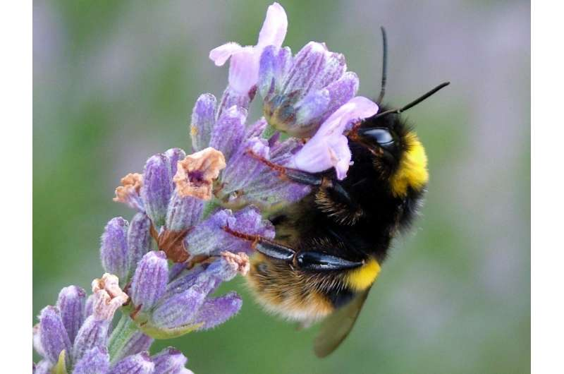 Research reveals why plant diversity is so important for bee diversity