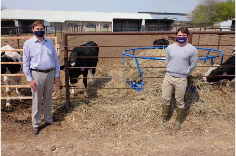 Study finds reduction in milk production among anaplasmosis-infected cattle