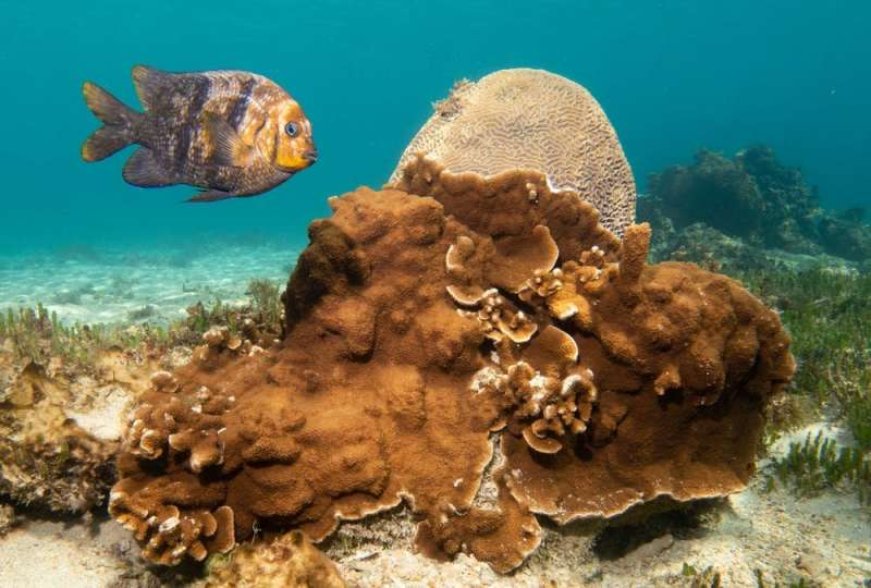 These underwater photos show Norfolk Island reef life still thrives, from vibrant blue flatworms to soft pink corals