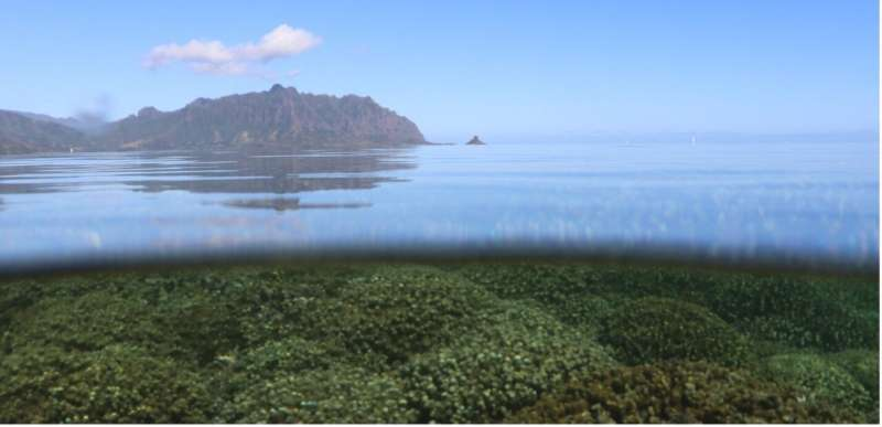 Uncovering how some corals resist bleaching