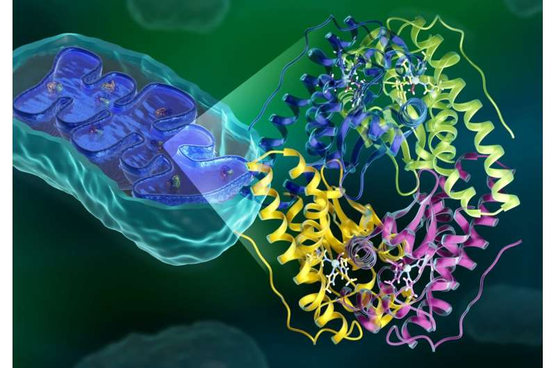 Researchers reveal elusive inner workings of antioxidant enzyme with therapeutic potential