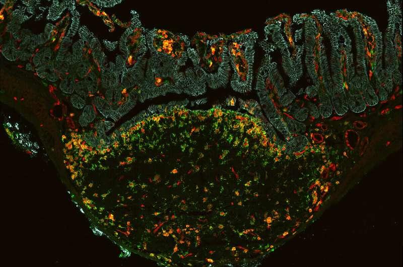 Researchers unveil new 'time machine' technique to measure cells