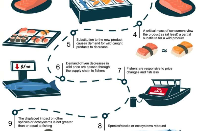 Researchers detail the long chain of events required for cultured seafood to deliver environmental benefits