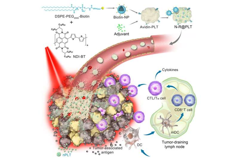 Scientists develop new platelet-based formulation for combination anticancer therapy
