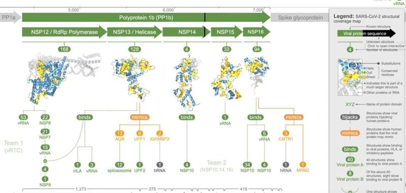 3D analysis of SARS-CoV-2 reveals clues on virus tactics