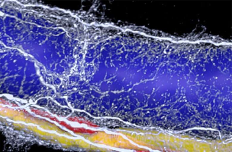 3D imaging reveals neural 'vicious cycle' in fatty liver disease