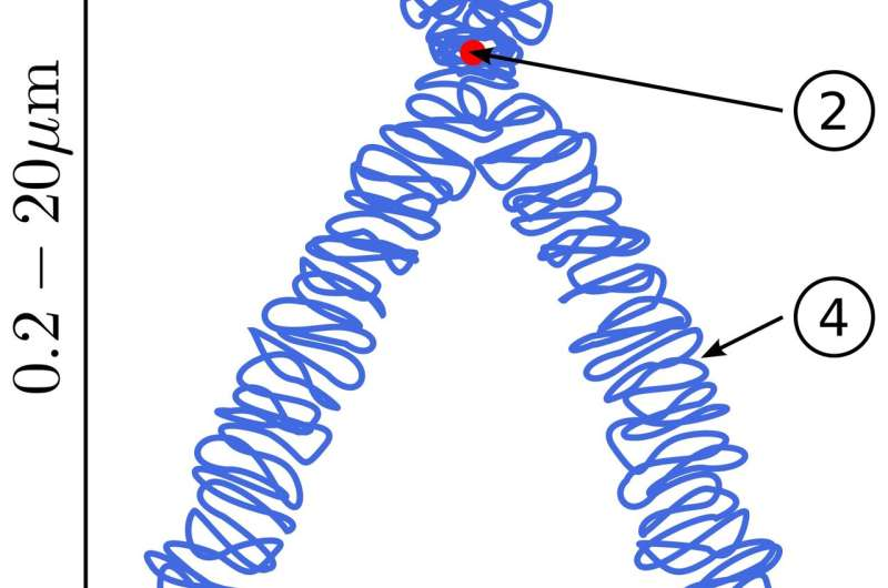 3D Creature construction; building chromosomes from the ground up
