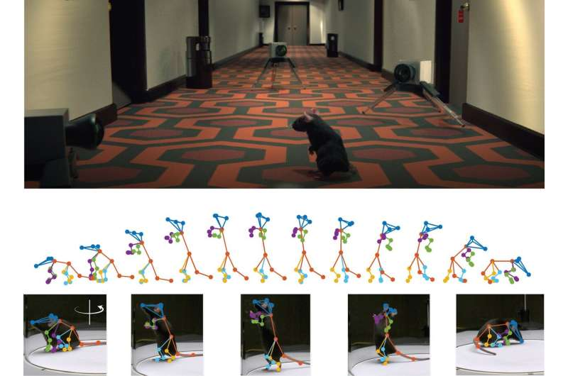 3D deep neural network precisely reconstructs freely-behaving animal's movements