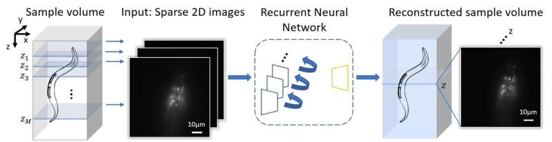 3D fluorescence microscopy gets a boost using recurrent neural networks