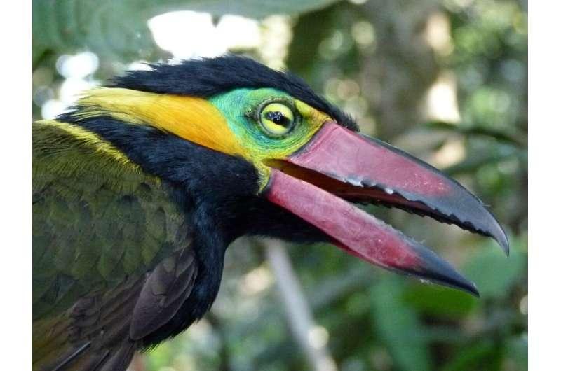La deforestación está cobrando un alto precio en el paraíso internacional de las aves