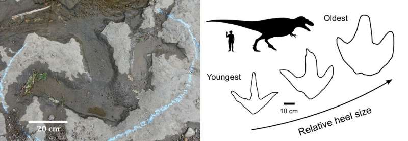 Fat-footed tyrannosaur parents could not keep up with their skinnier adolescent offspring
