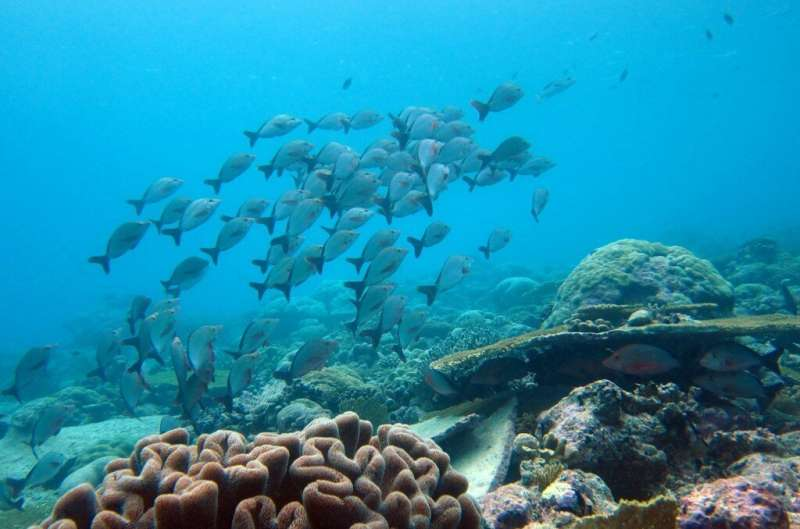 New evidence shows important seabird nutrients reach coral reefs after rat eradication