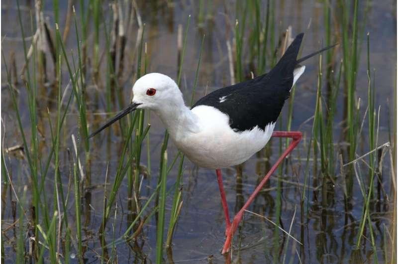 Los científicos muestran el impacto de la actividad humana en las especies de aves
