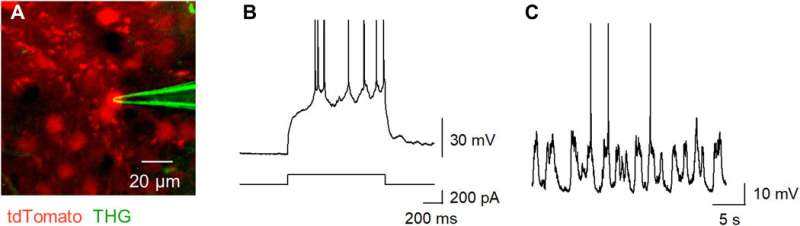 Terbium (III)-doped fluorescent glass for biomedical research
