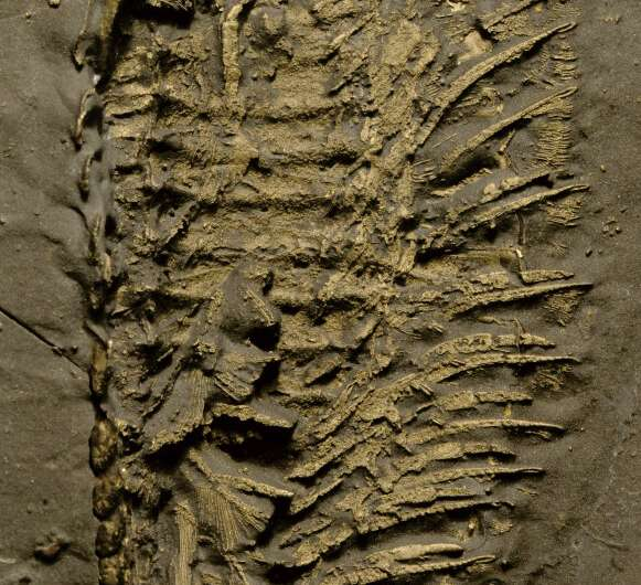 450-million-year-old sea creatures had a leg up on breathing