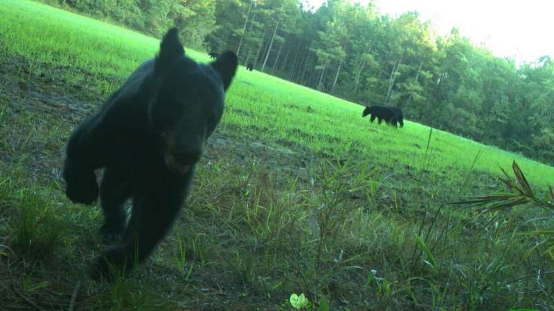 Citizen science study captures 2.2M wildlife images in NC