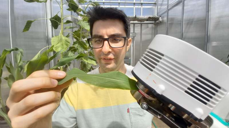 Scientists show drought-tolerant crops need skin in the game
