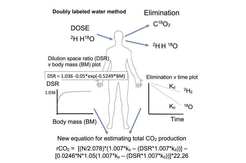 Researchers define new equation for doubly labeled water studies