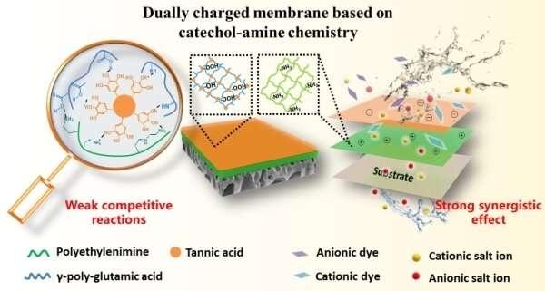 Researchers develop nanofiltration membrane for highly efficient dye/salt separation