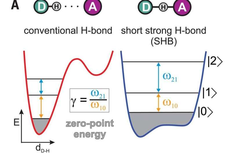 Experiments with bifluoride ions show evidence of hybrid bonds