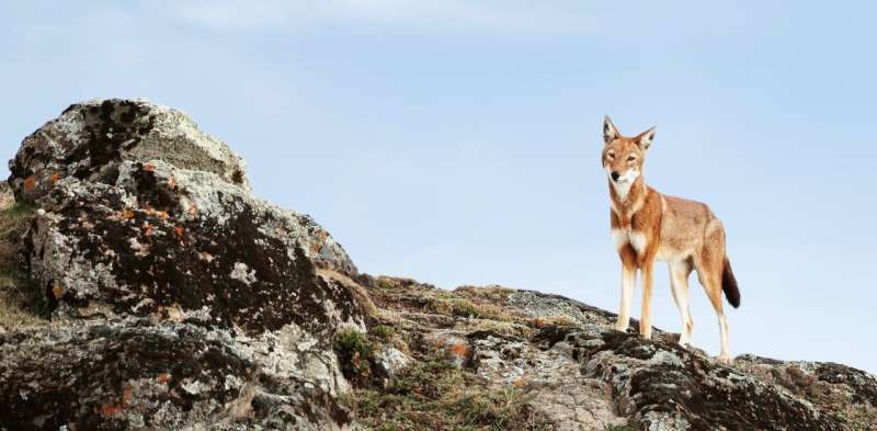 Conservation hope: Many wildlife species can recover if given a chance