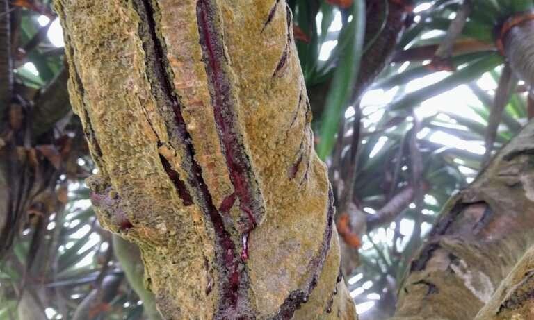 Especies desatendidas: alerta roja para árboles en peligro de extinción