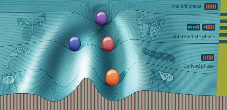 Simulating evolution to understand a hidden switch