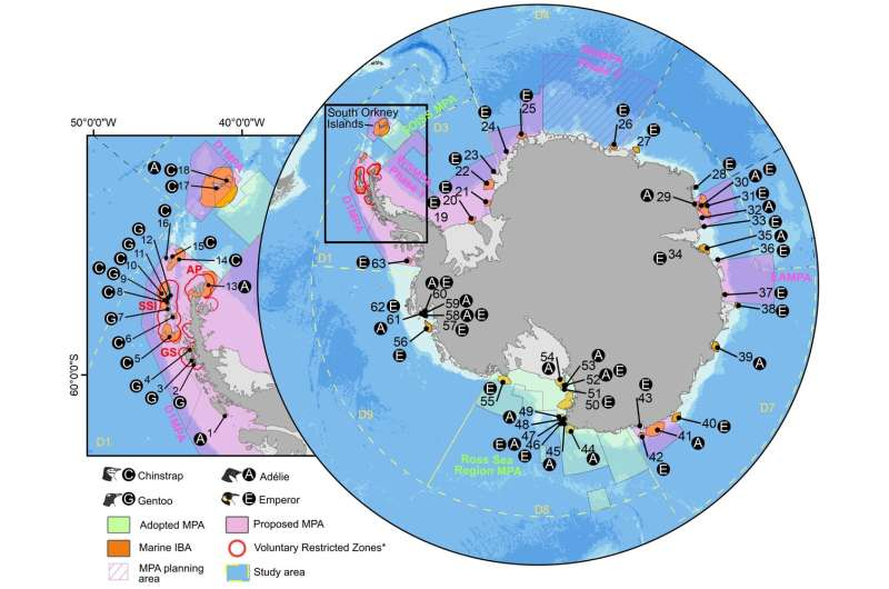 Study shows how network of marine protected areas could help safeguard Antarctic penguins