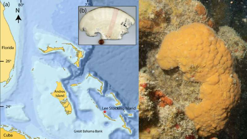 600-year-old marine sponge holds centuries-old climate records