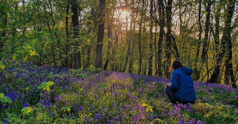 Survey shows more wildflowers in bloom during January than ever before
