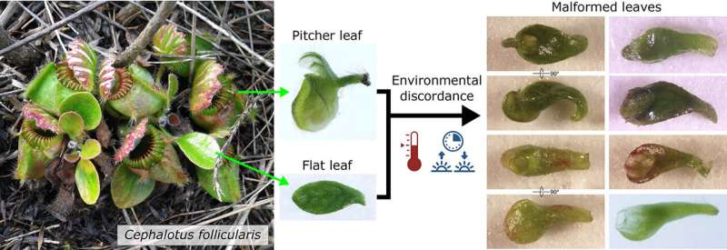 How climate caprices can trigger plants