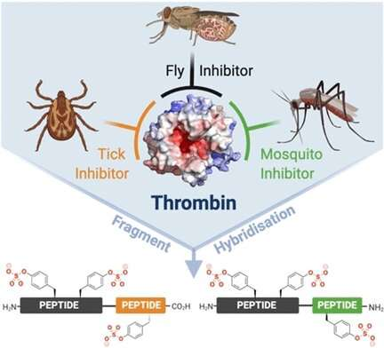 Potent trivalent inhibitors of thrombin from anticoagulation peptides in insect saliva
