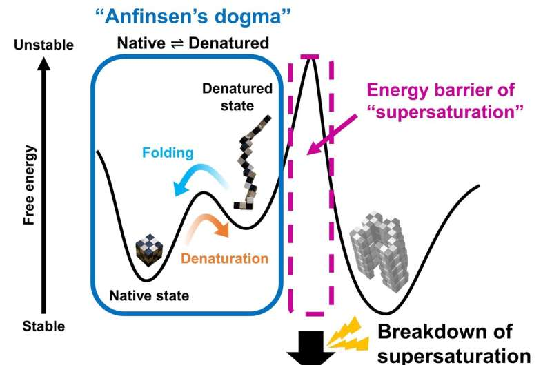 Supersaturation: the barrier between protein folding and misfolding