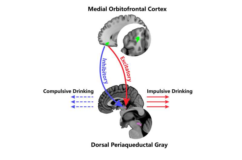 Neural roots and origins of alcoholism identified