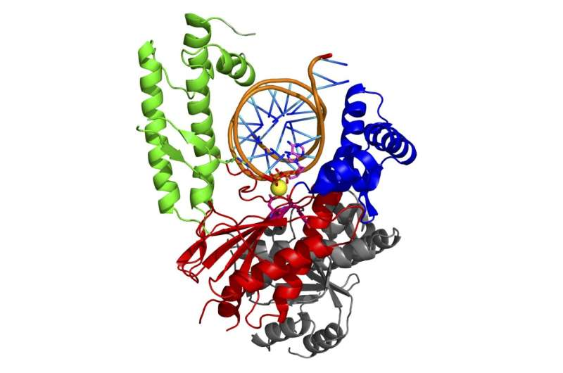 Study identifies never-before-seen dual function in enzyme critical for cancer growth