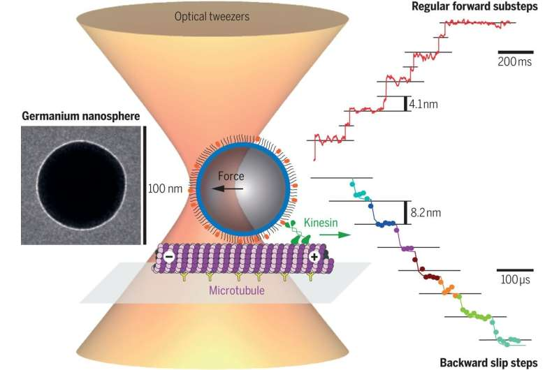 Nanospheres measure the forces of cell motors