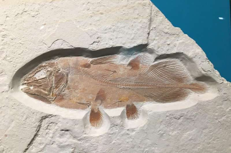 Enormous ancient fish discovered by accident