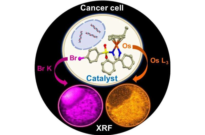 Scientists observe how potential cancer treatment reacts in single cell