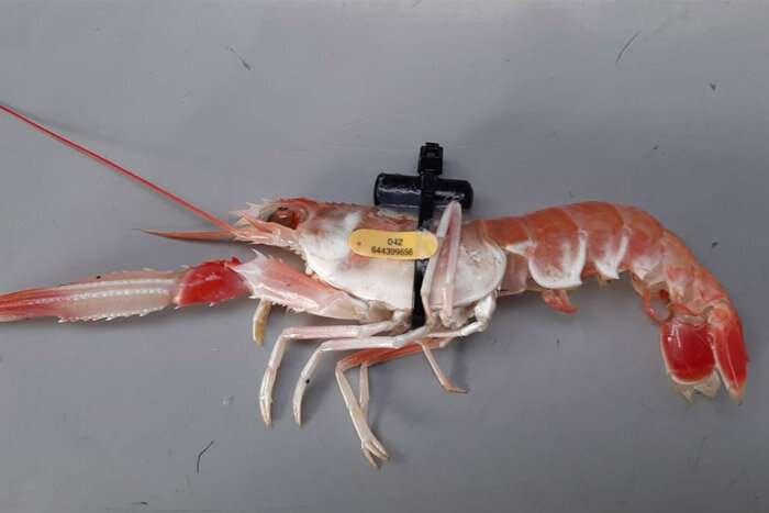 Robot bawah air adalah kunci untuk memahami dan melindungi spesies laut dalam