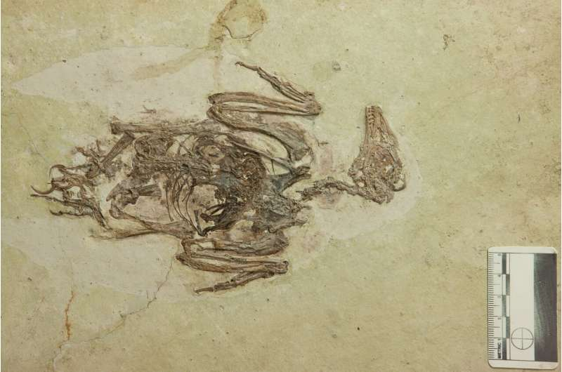 Quartz crystals in the stomach of fossil bird complicates the mystery of its diet