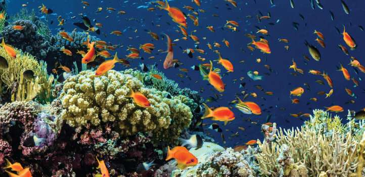 Microbiome boost may help corals resist bleaching