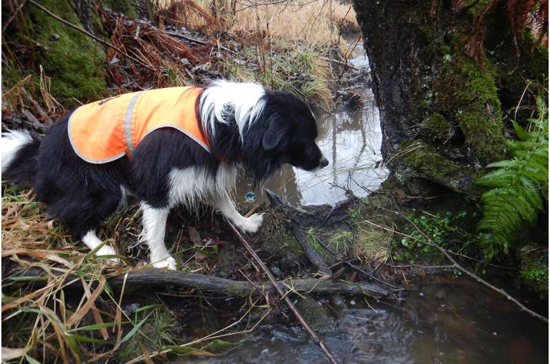 Detection dogs help generate important data for research and conservation