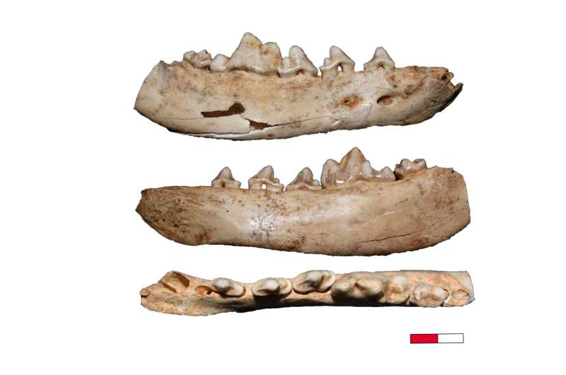 European domestic dog may have originated in Southwestern Germany
