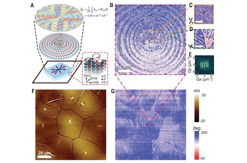 Concentric circular bands of polarization found in a ferroelectric polymer