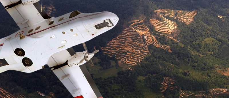 Ecosystem restoration is a pressing issue in fragmented rainforest